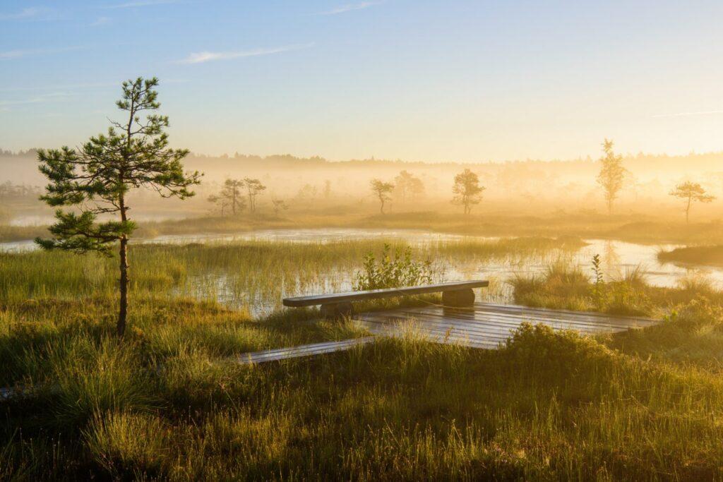 Soomaa National park by Sven Zacek
