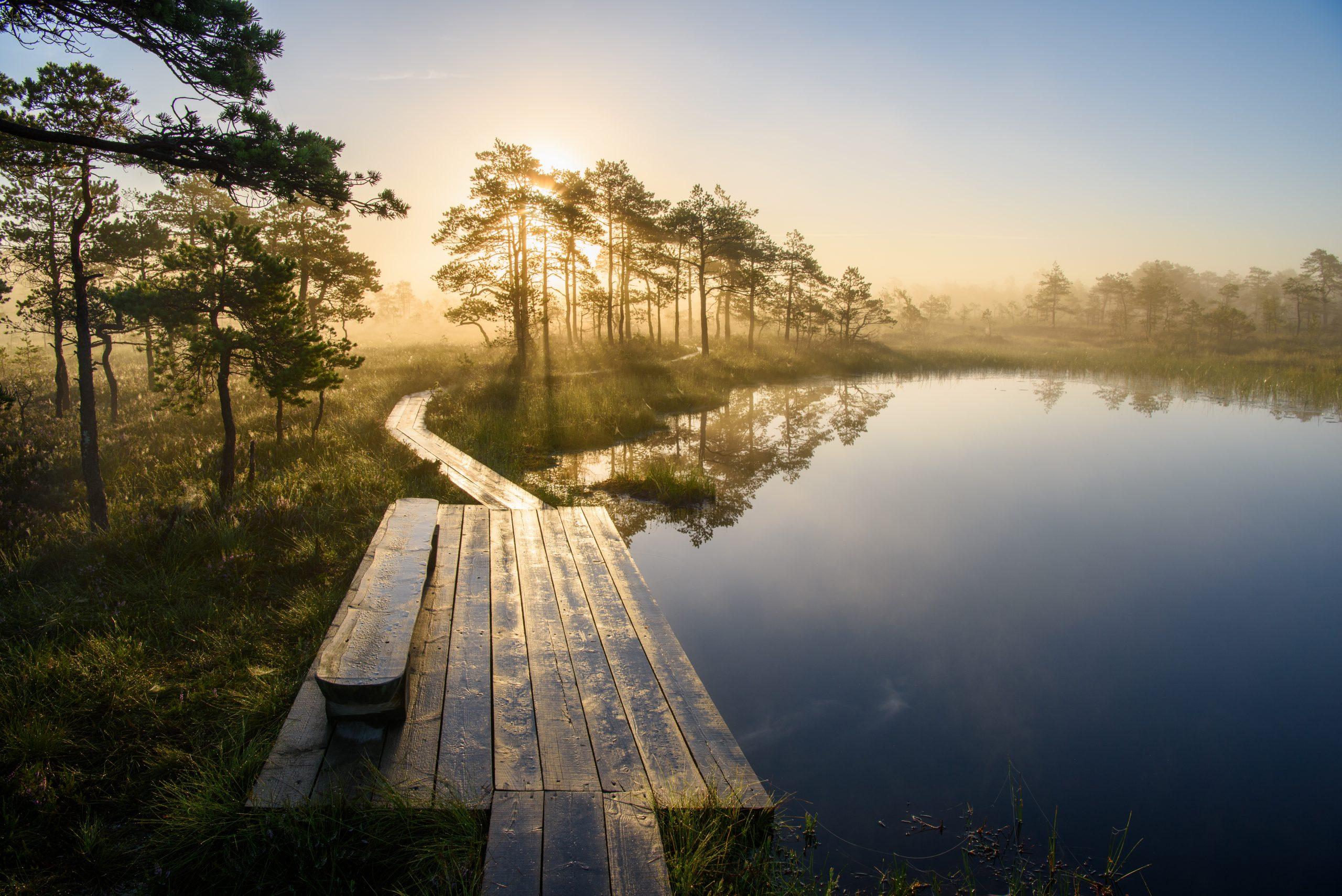 Morning Bog Lake